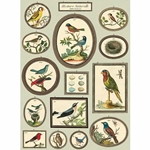 "Cavallini Decorative Paper- Natural History Birds #2 20""x28"" Sheet"