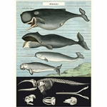 "Cavallini Decorative Paper- Whale Chart 20""x28"" Sheet"