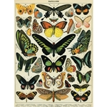 "Cavallini Papers from Italy - Papillons 20""x28"" Sheet"