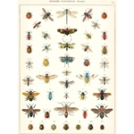 "Cavallini Papers from Italy - Natural History Insects 20""x28"" Sheet"