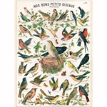 "Cavallini Papers from Italy - Bird Chart 20""x28"" Sheet"