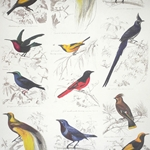 Rossi Decorative Paper from Italy- Birds 28x40 Inch Sheet