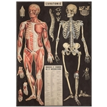 "Cavallini Decorative Paper - L'Anatomie 20""x28"" Sheet"