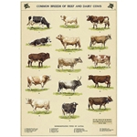 "Cavallini Decorative Paper - Cow Chart 20""x28"" Sheet"