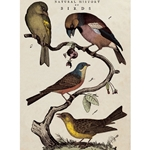 "Cavallini Decorative Paper - Natural History Bird Print 20""x28"" Sheet"