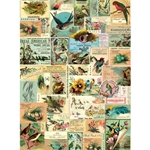 "Cavallini Decorative Paper - Bird Ephemera 20""x28"" Sheet"