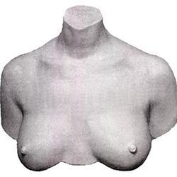 Art Molds My Breast Friends Life Casting Kit
