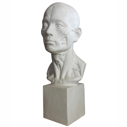 Life Sized Human Head with on a Base