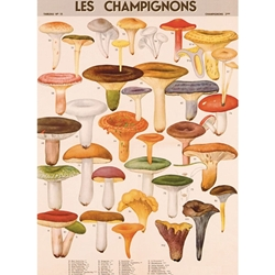 "Cavallini Papers from Italy - Mushrooms 20""x28"" Sheet"