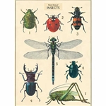 "Cavallini Decorative Paper- Insect Chart 20""x28"" Sheet"