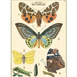 "Cavallini Decorative Paper- Butterfly Chart 20""x28"" Sheet"