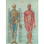"Cavallini Decorative Paper- Anatomy Series 20""x28"" Sheet"