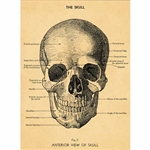 "Cavallini Decorative Paper- The Skull 20""x28"" Sheet"
