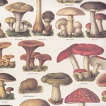 Tassotti Paper- Mushrooms 19.5x27.5 Inch Sheet