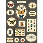 "Cavallini Decorative Paper- Butterflies & Insects #3 20""x28"" Sheet"