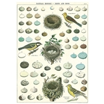 "Cavallini Decorative Paper - Bird, Eggs & Nest 20""x28"" Sheet"