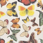 Tassotti Paper- Butterfly Collection 19.5x27.5 Inch Sheet