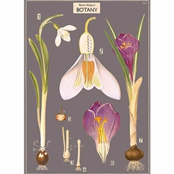 "Cavallini Decorative Paper- Botany Chart 20""x28"" Sheet"
