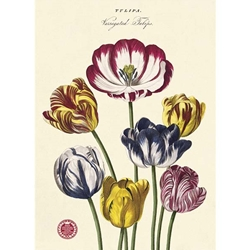 "Cavallini Decorative Paper - Tulip #2 20""x28"" Sheet"