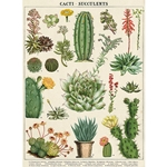 "Cavallini Decorative Paper - Cacti & Succulents 20""x28"" Sheet"