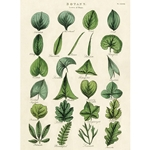 "Cavallini Decorative Paper - Botany Leaves 20""x28"" Sheet"