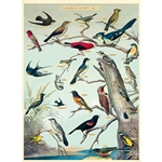 "Cavallini Decorative Paper - Audubon Birds 20""x28"" Sheet"