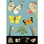 "Cavallini Decorative Paper - Butterfly Chart 2 20""x28"" Sheet"