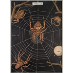 "Cavallini Decorative Paper - Spider Chart 20""x28"" Sheet"