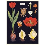 "Cavallini Decorative Paper - Tulip 20""x28"" Sheet"