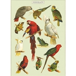 "Cavallini Decorative Paper - Parrots 20""x28"" Sheet"