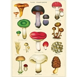 "Cavallini Decorative Paper - Mushrooms 2 Wrap 20""x28"" Sheet"