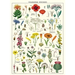 "Cavallini Decorative Paper - Wildflowers 20""x28"" Sheet"