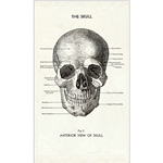 Cavallini Tea Towel- The Skull