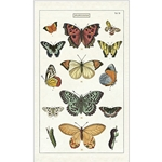 Cavallini Tea Towel- Butterflies