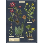 "Cavallini Decorative Paper - Herbarium 20""x28"" Sheet"