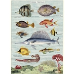 "Cavallini Decorative Paper - Tropical Fish 20""x28"" Sheet"