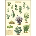 "Cavallini Decorative Paper - Kitchen Herbs 20""x28"" Sheet"