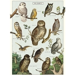 "Cavallini Decorative Paper - Owl Chart 20""x28"" Sheet"