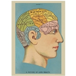 "Cavallini Decorative Paper - Phrenology (Brain) 20""x28"" Sheet"