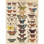 "Cavallini Decorative Paper - Natural History Butterflies 20""x28"" Sheet"