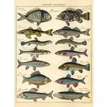 "Cavallini Decorative Paper - Natural History Fish 20""x28"" Sheet"